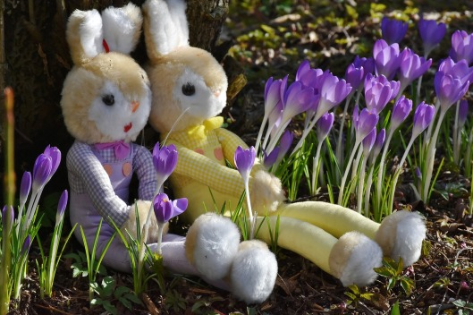 rabbit-2137741_1280