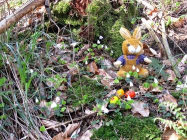 Osterhasi im Wald
