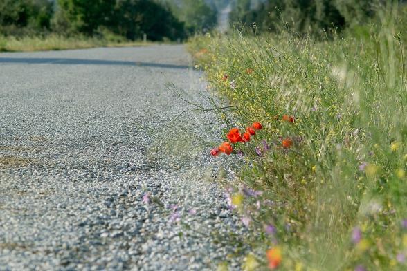 Schade, sagte © hzlatarski:pixabay road-1585170_1920