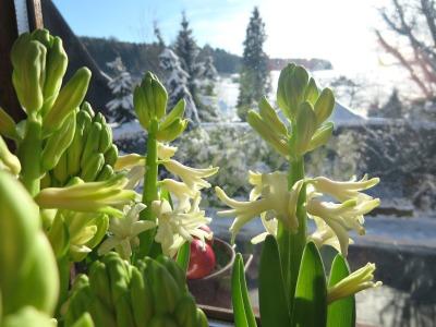FrühlingWinter