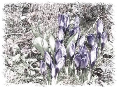 8Als der kleine Sonnenstrahl dem Frühling half