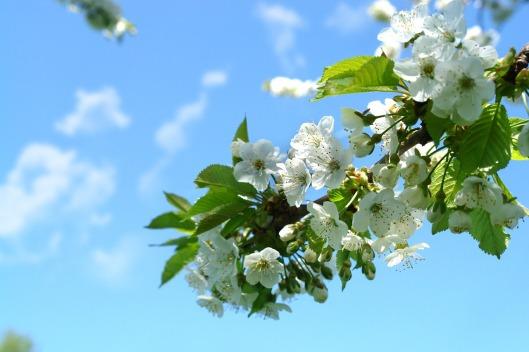 spring-1250068_1280