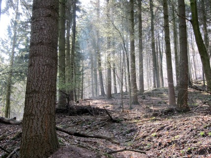 Fruehlingswald und Sonnenstrahl