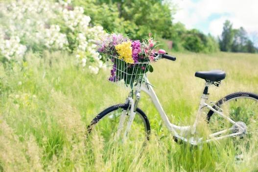 Wiesenblütenfrühling © jill111:pixabay bicycle-788733_1920.jpg