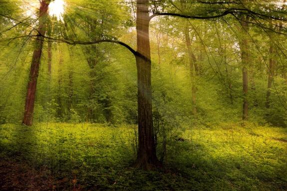 Im Mai ist es im Wald am schönsten © valiunic:pixabay forest-1345748_1920.jpg