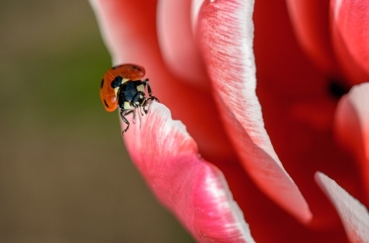 ladybug-1330093_1280