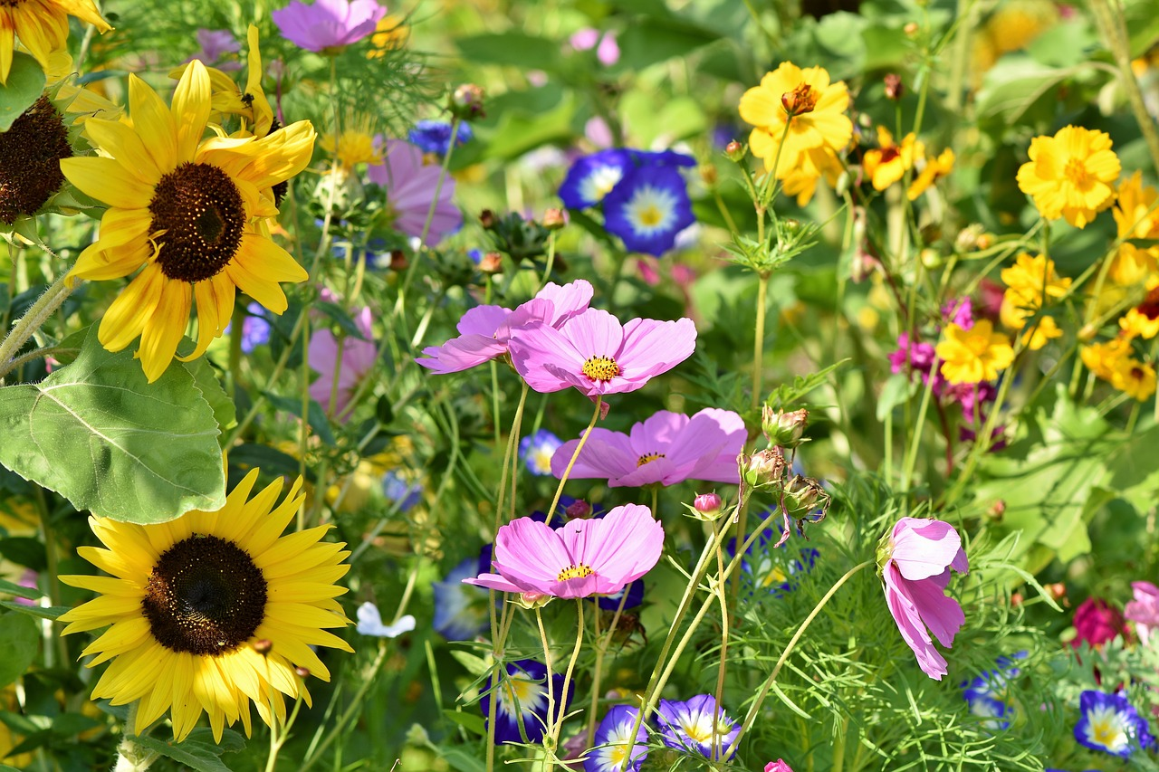 flower-meadow-3598555_1280
