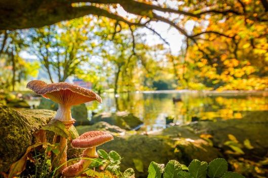 mushroom-2857847_1280