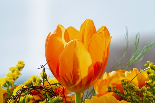 tulip-3987338_1280