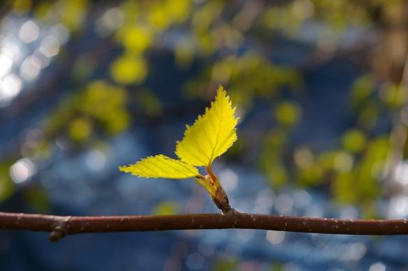 Frühlingsgeschichte Für Senioren Frühlingszeit